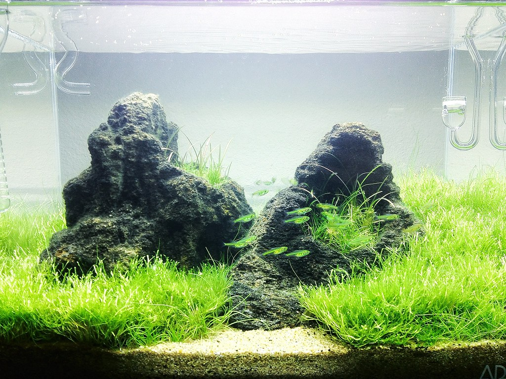 Awesome Franku0027s Planted Tank How To Mini Novel   The Mini S Returns! New Layout    The Planted Tank Forum