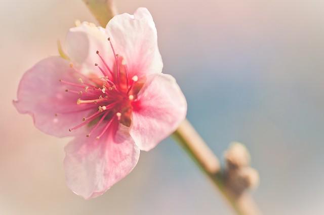 Spring Time 25