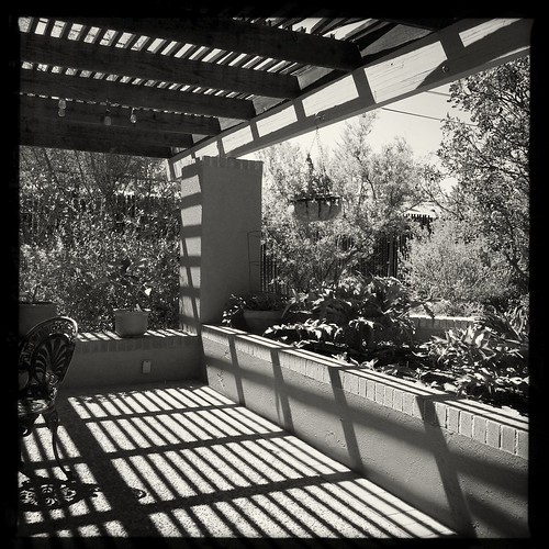 Black and Whites at Tucson Botanical Gardens