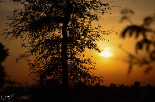 sunset tree amazing dubai sunphotography