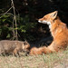 Red Fox Mom & Kit by NicoleW0000