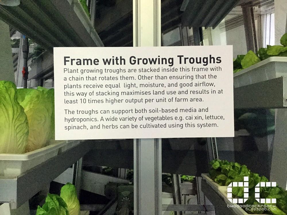 vertical farming, science, science centre, science centre singapore,singapore science centre, singapore, singapore innovations, where to go in singapore