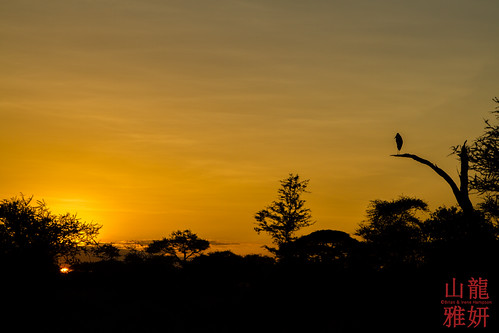 africa bird landscape tanzania safari mara tz maraboustork serengetinationalpark leptoptiloscrumenifer katikaticamp seroneraregion tzday03 katikatitentedlodge africanwildcatsexpeditions