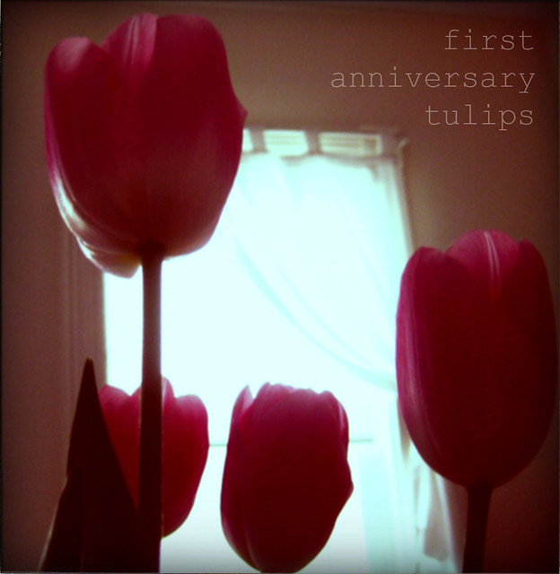 first anniversary tulips