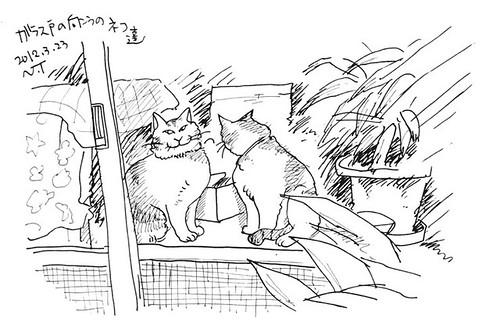 ガラス戸の向こうの猫たち Cats which were beyond a glass door of store