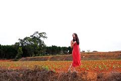[フリー画像素材] 人物, 女性 - アジア, 台湾人, ワンピース・ドレス, 人物 - 見上げる, 人物 - 田園・農場 ID:201204060800
