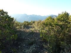 Piste d'Alzu di Lanu : arrivée à la borne 790m