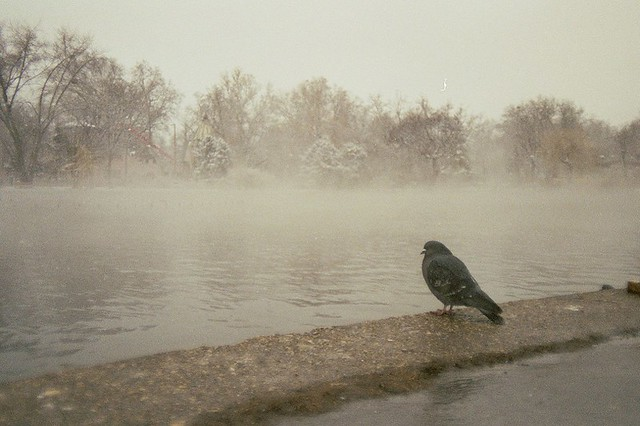 Budapest, city, streets, tour, trip, journey, Hungary,  snow, winter, spring, 35mm film photography,  Kodak MAX 400 expired, bird sitting, pigeon, hot water stream, wintertime, park