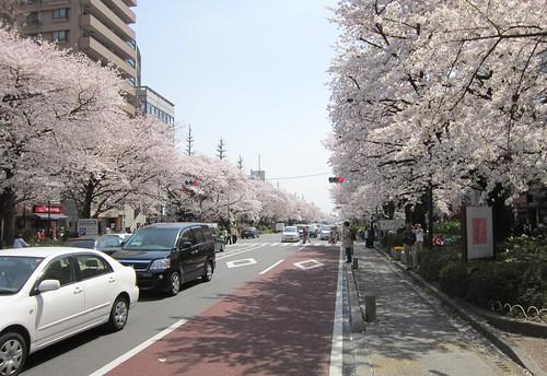 国立駅南口から見た大学通り 2012年4月10日 by Poran111