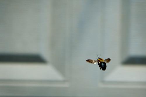 003 bee