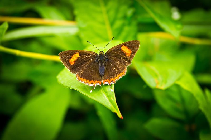 這是蝶還是蛾啊?????