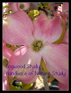 Dogwood Study Button