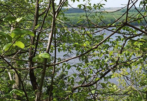 1738 river thru leaves