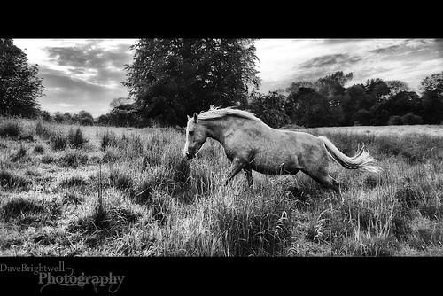 Free Spirit by Dave Brightwell