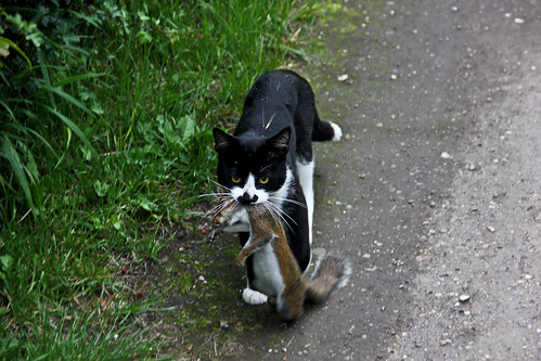 Cat with Dead Squirrel