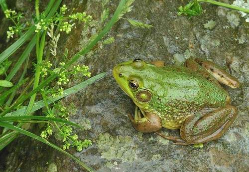 Field Ponds Audubon Center - Maine