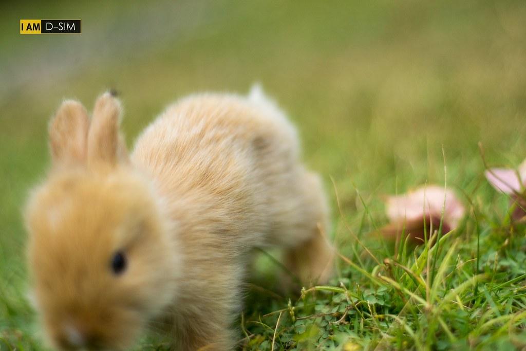 Baby Rabbit (5)