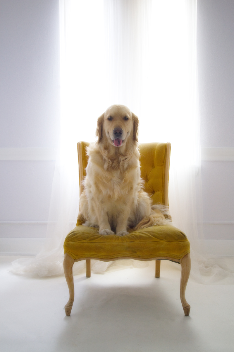 Goldie's Chair