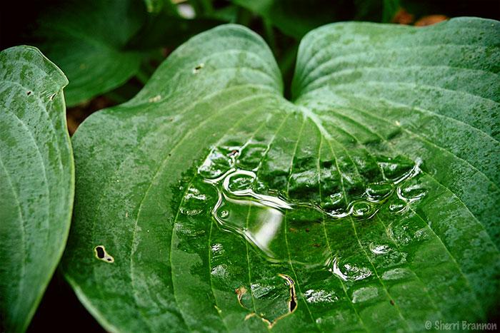 leaf puddle