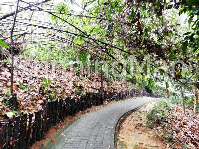Bukit Batok Nature Park 06