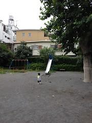 朝散歩 とらちゃん 公園 (2012/7/22)