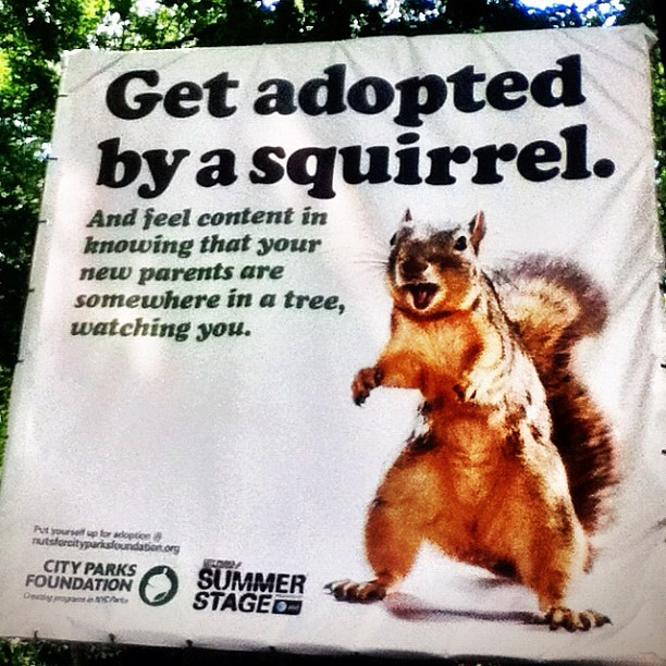 Glad to see that NY has these funny Get Adopted by a Squirrel ads, too