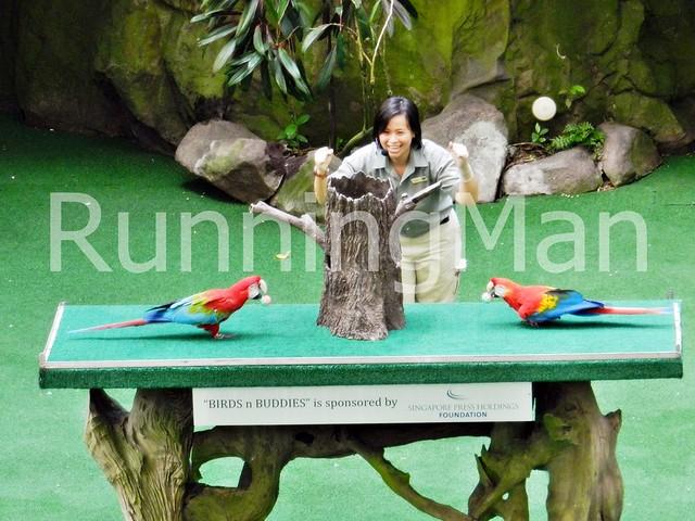 Jurong Bird Park 03