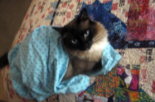 bebop in my nightie