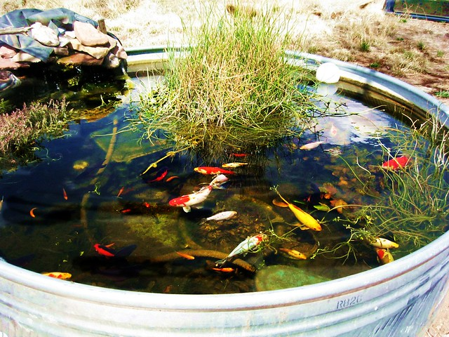 Stock Tank Water Garden Flickr Photo Sharing
