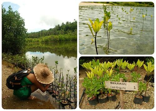 Mangrove and Bird Sanctuary