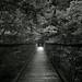 beyond the bridge by kkzyk