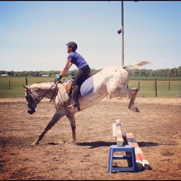 Up and Over #horse #jump