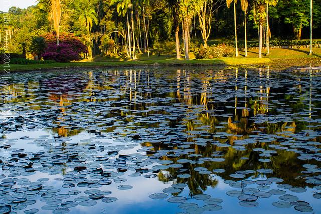 Jardim Botânico, São Paulo, Brasil - Botanical Garden, São Paulo, Brazil