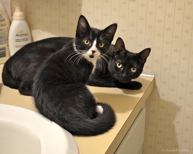 Black mama cat and black-and-white tuxedo kitten, by Elizabeth Ruffing