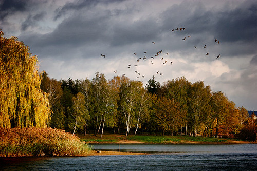 blue autumn trees cloud lake color tree 20d water horizontal canon landscape flying colorful hungary cloudy ducks willow shore birch