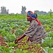 Supporting Returnees - Burundi