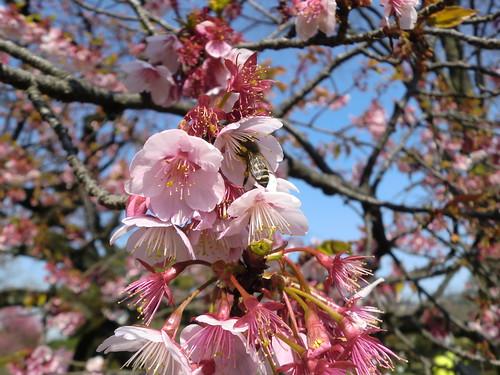 20120328小石川植物園-081