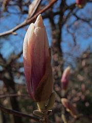 High Park_Spring 2012