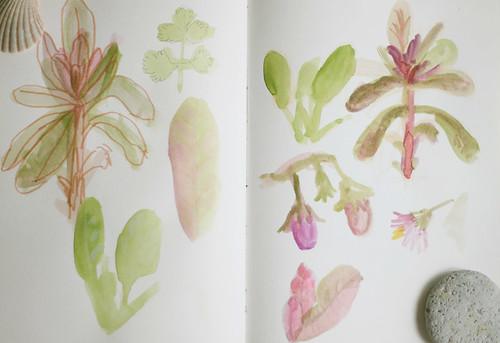 Garden Sketches 01