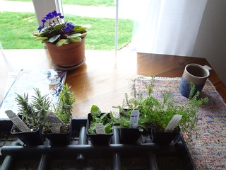 2012.04_new plants