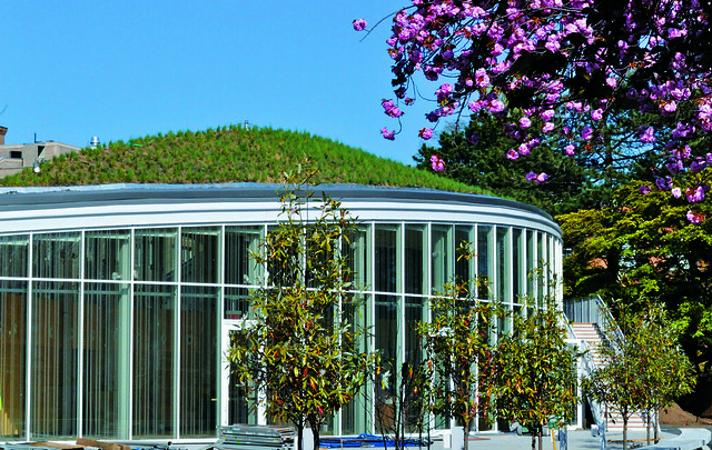 Among the green roof's multiple environmental benefits is its ability to capture rainwater. Photo by Elizabeth Ennis.