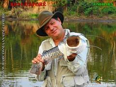 fish, fishing, recreation, outdoor recreation, recreational fishing, fauna, fly fishing,