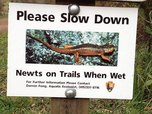 newts on trail when wet.JPG