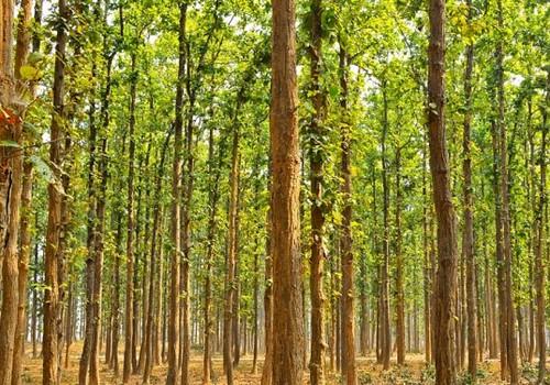 Удивительно, но руководство департамента лесопользования штата Ассам узнало о творении Пайенга только в 2008 году