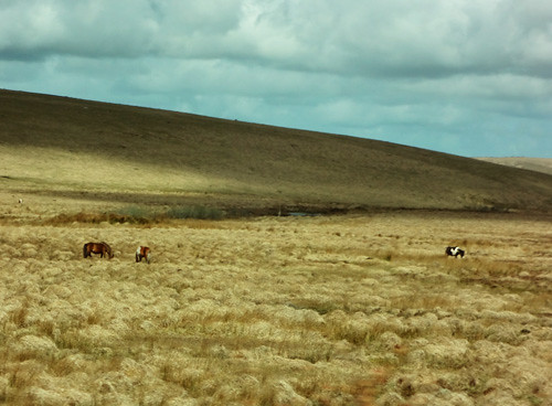 Day in the life: 5 bodmin moor