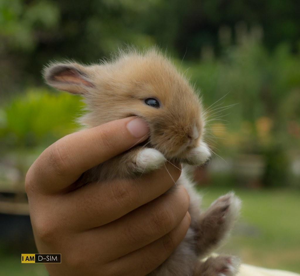 Baby Rabbit (11)