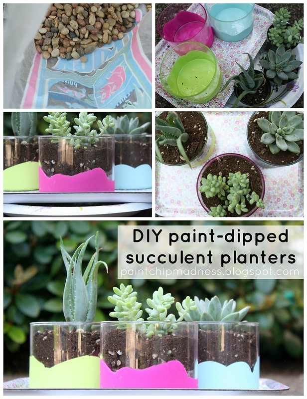 diy paint-dipped succulent planters by paint chip madness