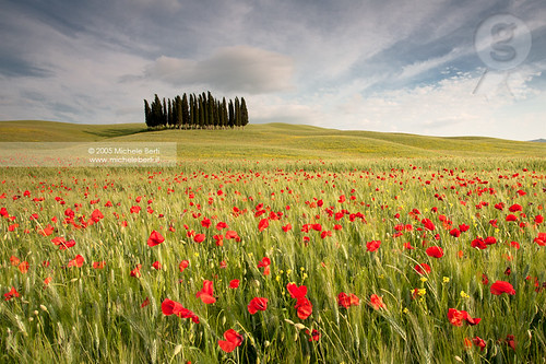 The wheat field with poppies and the cypress trees (May 2005)