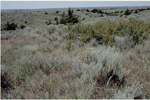 Advanced woody encroachment of mixed-grass prairie