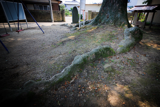 #40 The Giant Zelkova of Kou Shrine